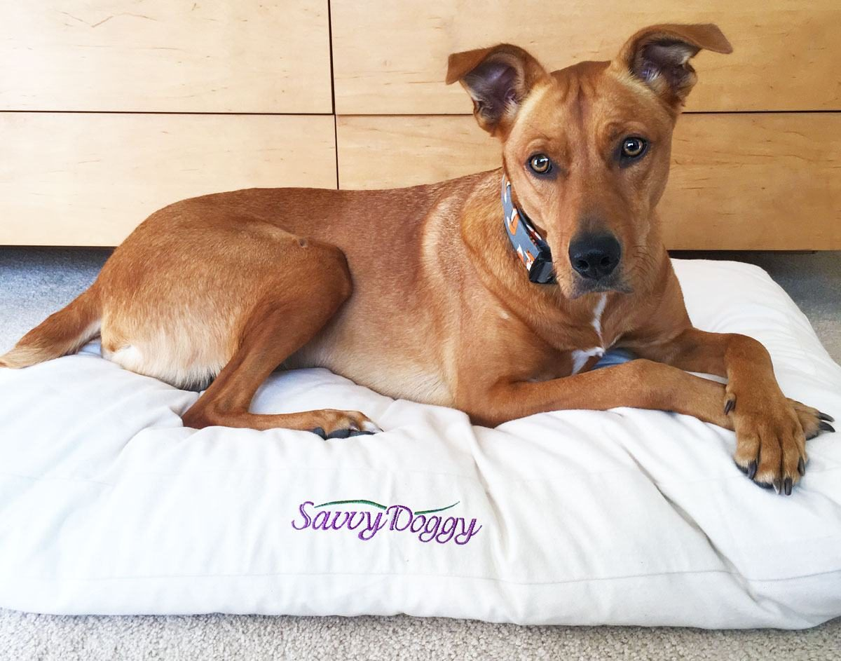 Savvy Doggy Organically Becca