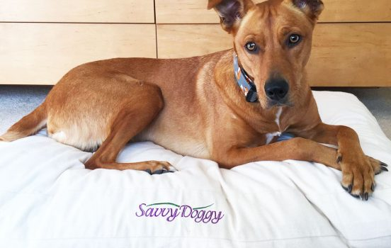 Savvy Doggy Organic Pet Beds: Because Your Fur Baby Deserves Non-Toxic!