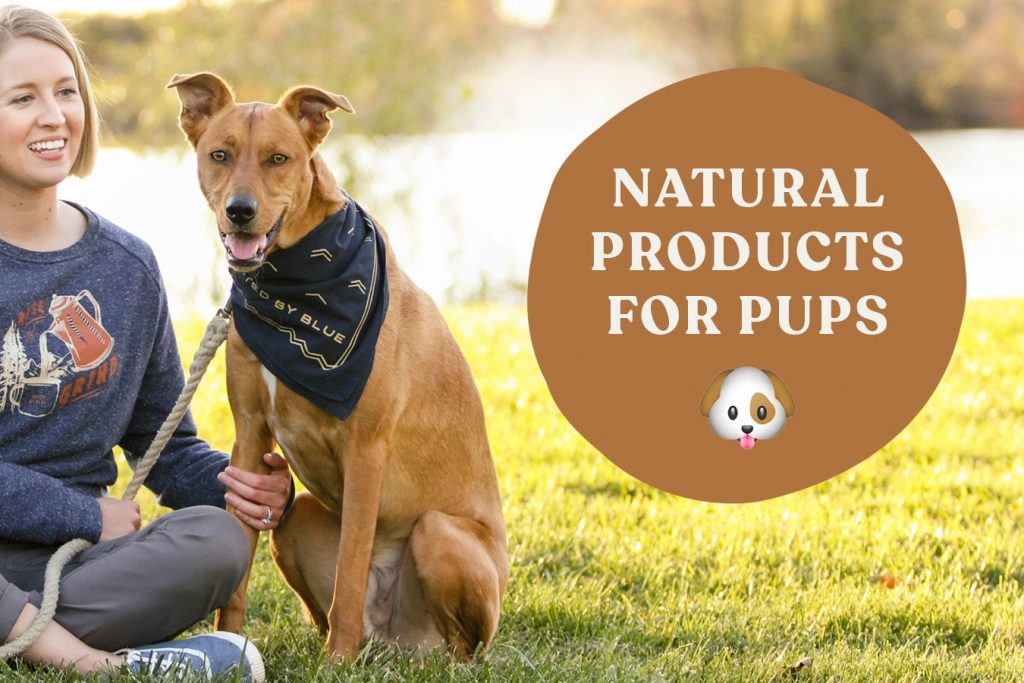 Organically Dexter: Best Natural Products for Dogs