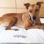 Savvy Doggy Organic Bed